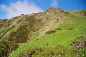 Alpine habitat - K Ramesh