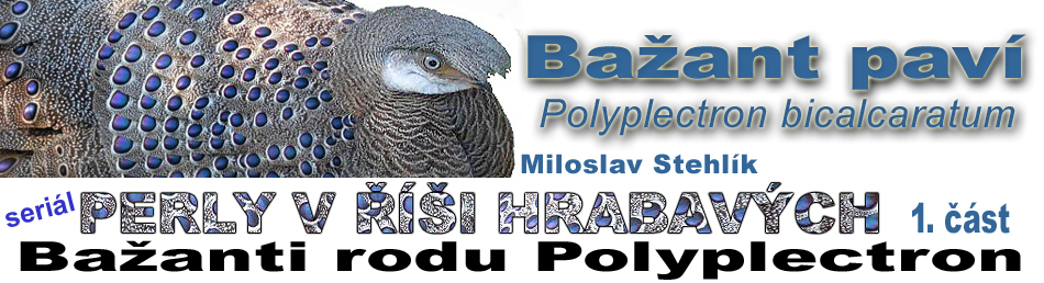 serial_perly_polyplectron_1cast_bicalcaratum